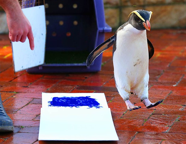 Penguin makes his pledge in Sydney, Australia