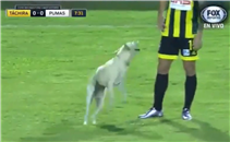 كلب يقتحم مباراة ببطولة كأس ليبرتادوريس