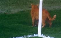 قطة تقتحم مباراة بيشكتاش وبايرن