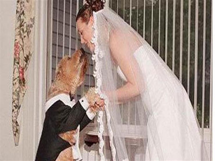 الزواج من كلب