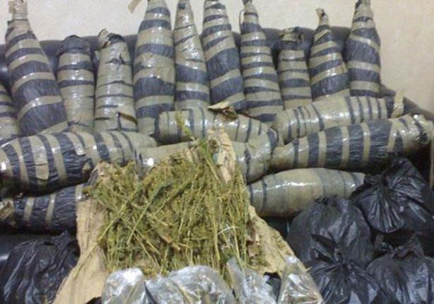 ضبط 15 طن بانجو عقب اشتباكات عنيفة مع أحد العناصر الخطرة بجنوب سيناء