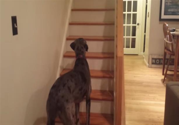 """رد فعل """"كلب"""" يرى شبحاً لأول مرة في حياته"""