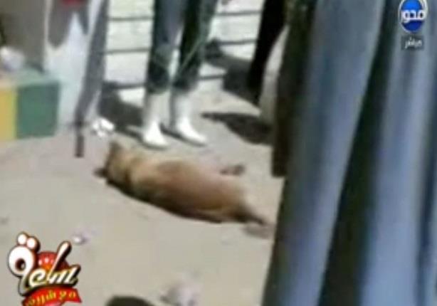ناشطة في حقوق الحيوان :أطباء كلية طب بيطري يرمون بكلب من الدور الثالث لكسر رجلة وعلاجه