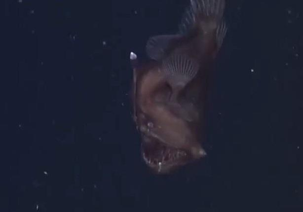"""لأول مرة... """"شيطان البحر الأسود""""يظهر في كاليفورنيا"""