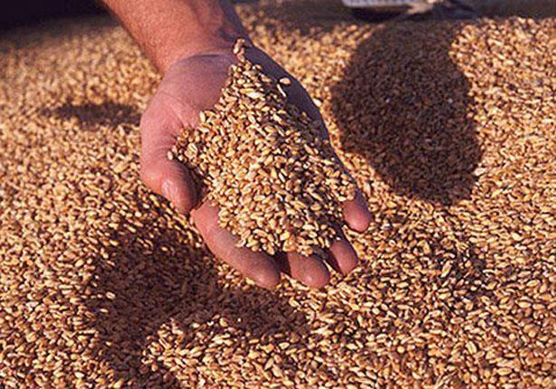 الزراعة ترصد 11 مليار جنيه لشراء القمح من الفلاحين