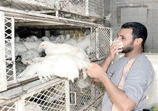 """الصحة: نتائج المعامل المركزية تؤكد إيجابية إصابة حالة بـ """"إنفلونزا الطيور"""" في سوهاج"""