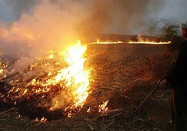 البيئة : السيطرة على حرائق قش الأرز بطريق