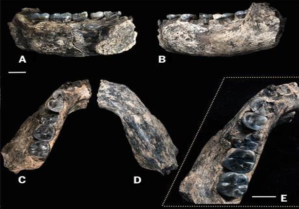 الاندبندنت: اكتشاف عظام بشرية عمرها نصف مليون عام