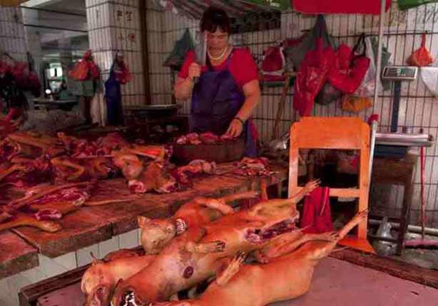 بالصور- غدا مهرجان لحوم الكلاب والقطط في جنوب الصين رغم الانتقادات