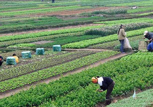 209 ملايين و600 ألف دولار صادرات الإسماعيلية الزراعية خلال 6 أشهر