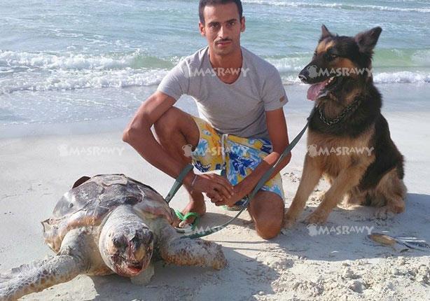 """بالصور - العثور على """"ترسة"""" ضخمة نافقة على شاطئ في الإسكندرية"""