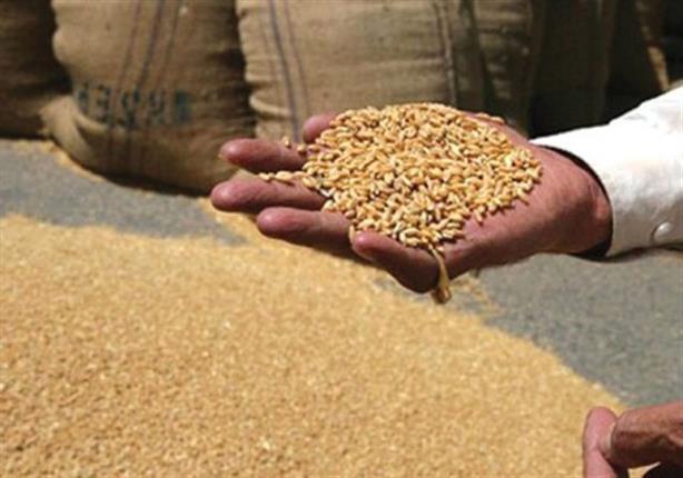 مصر تشتري 420 ألف طن قمح روماني وروسي