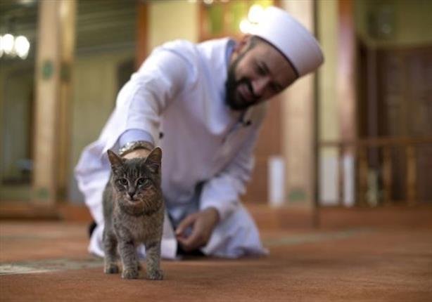 اهتمام محلي وأجنبي بإمام تركي يرعى القطط في المسجد