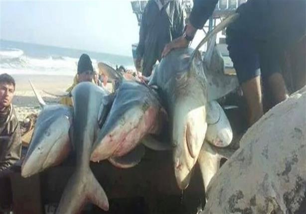 """وزير البيئة: ظهور الحيتان والقروش في مصر """"شئ طبيعي"""" - (فيديو)"""