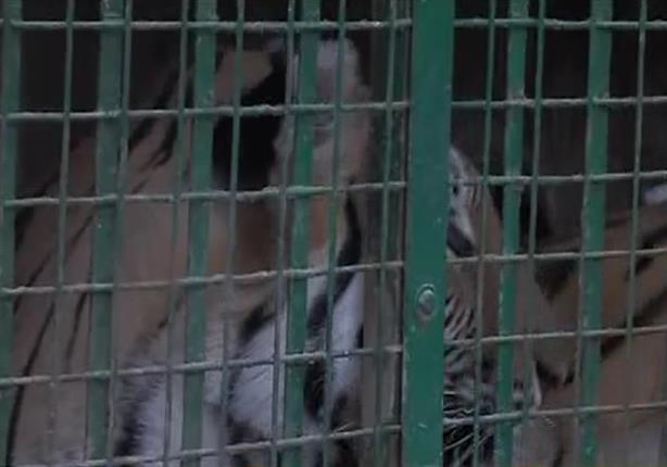 """""""النيابة"""": تعيين حراسة مشددة على مزرعة الحيوانات المفترسة بالعياط"""