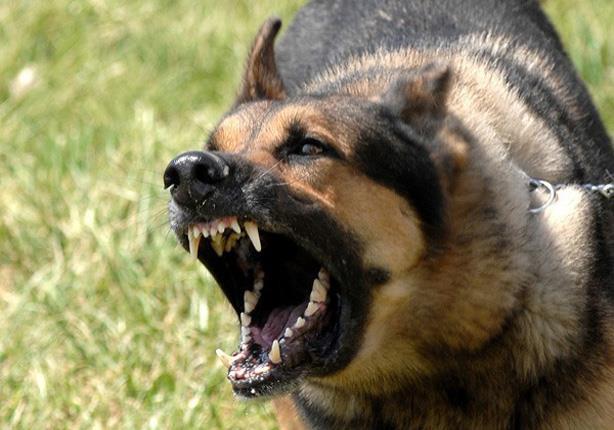 بعد ضحية أسوان.. ماذا تفعل إذا عضك أو خدشك كلب؟