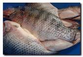 دراسة: السمك يساعد على التوقف عن التدخين