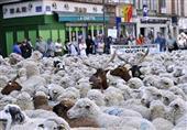 الخراف.. نوع جديد من المحتجين في فرنسا