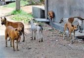 إعدام 45 كلب ضال لمجابهة الأمراض الوبائية بالمنيا