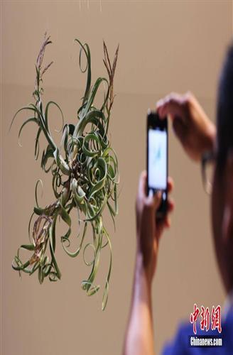 لأول مرة نباتات تنمو فى الهواء دون الحاجة لوجود تربة !!