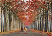 بالصور- شوارع ساحرة تظللها الزهور والأشجار حول العالم