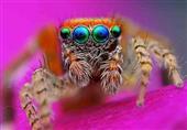 20 صورة لأجمل عيون الحيوانات