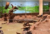 عمر حيواناتها 300 عام قبل الميلاد.. هنا أول متحف حيواني بالشرق الأوسط (صور)