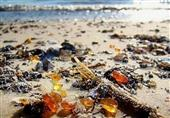 الكهرمان يغطى إحدى الشواطئ بروسيا.. شاهد
