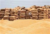 مصر تشتري 180 ألف طن قمح روسي وروماني