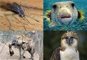 بالصور - أكثر 10 حيوانات مفترسة فى العالم والأولى قد تٌصدمك
