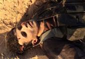بالصور- القوات المسلحة تعلن نتائج عملياتها في سيناء خلال شهر فبراير
