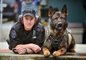 الجارديان: الكلاب أقدم أصدقاء الإنسان