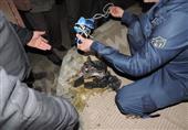 الجيش يحبط تفجير عبوة ناسفة تستهدف رتل عسكري كبير برفح