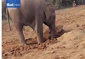 بالفيديو: 11 ساعة لإنقاذ فيل