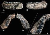 الاندبندنت: اكتشاف عظام بشرية عمرها نصف مليون عام ( فيديو)