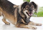 """دراسة أمريكية تحذر من تفشي فيروس """"أنفلونزا الكلاب"""""""
