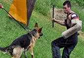 الكلاب يمكنها التعرف على الأشخاص غير الجديرين بالثقة