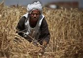 زيادة حصة السولار للمنوفية إلى مليون و ٢٠٠ الف لتر استعداد لحصاد القمح