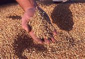 وزير التموين: 447 ألف طن كمية القمح المحلي المورد حتى اليوم