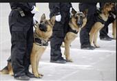 """مصر تستورد 1400 كلب """"بلجيكى"""" لــ """" مكافحة الارهاب"""" وتأمين حفل قناة السويس"""