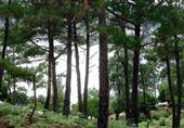 طرح بيع ١١٠٠ شجرة بالسادات فى مزاد علنى بالمنوفية