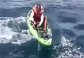 بالفيديو - سمكة قرش تهاجم صياد أمريكي