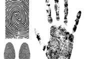 مفاجأة علمية تثير شكوكًا حول استخدام بصمة الأصابع كدليل إدانة