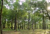 تنفيذ 40% من مشروع الـ 300 فدان غابات شجرية في الفرافرة