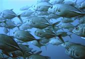 باحث فرنسي: أنواع عديدة من الأسماك ستنقرض بنهاية القرن الـ21