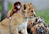 أصدقاء خارج الفطرة في عالم الحيوان..بالصور