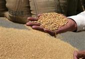 مصر تتعاقد على شراء 235 ألف طن قمح روسي وأوكراني