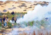 حرق 4 أفدنة ''بانجو'' بسيناء