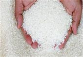مصدرون: موافقة الحكومة على تصدير الأرز لصالح مصر والفلاح