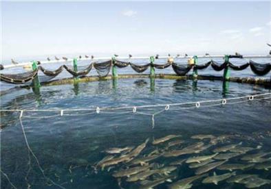 الزراعة: نستهدف زيادة الإنتاج السمكي بـ